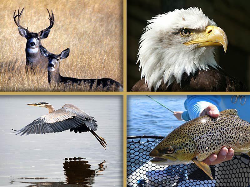 Southwest Colorado Wildlife